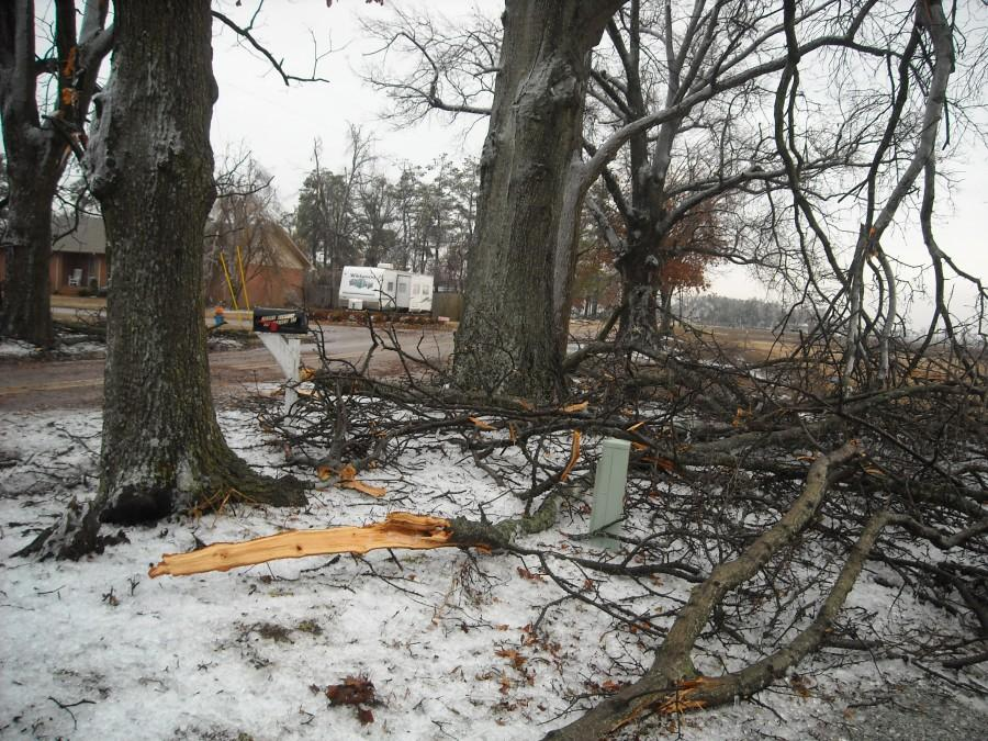 Broken and split tree limbs have been a common sight since the ice storm.