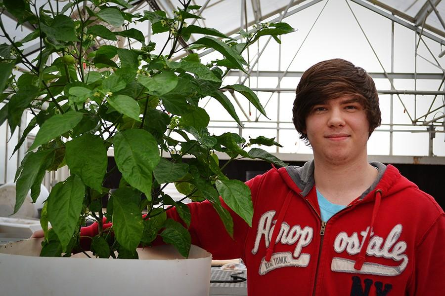 Hunter Burns, 12, with his Trinidad moruga scorpion pepper plant that he is growing in the agri greenhouse. Burns received the seeds for the plant from a neighbor who knew of his fascination with creating his own hot sauces.